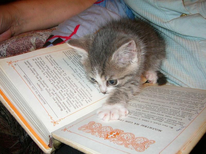 5 советов, как найти время для чтения книг